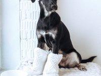 Керамическая миска для собак